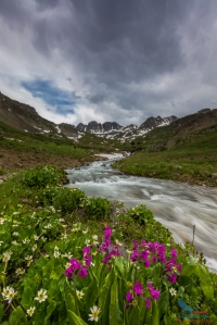 Lake Fork Gunnison River Wildflowers